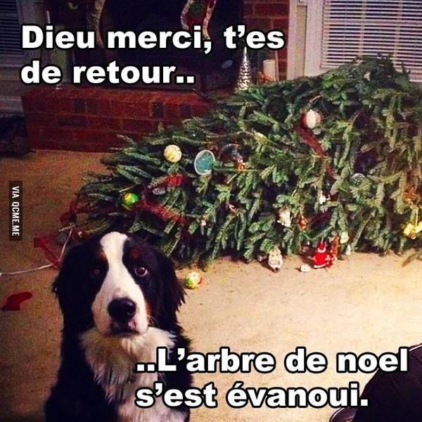 Humour - Sapin de noel humour ...